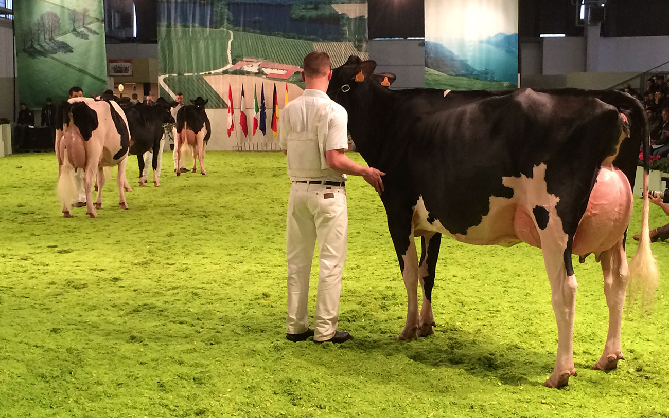 Dairy Show 2019